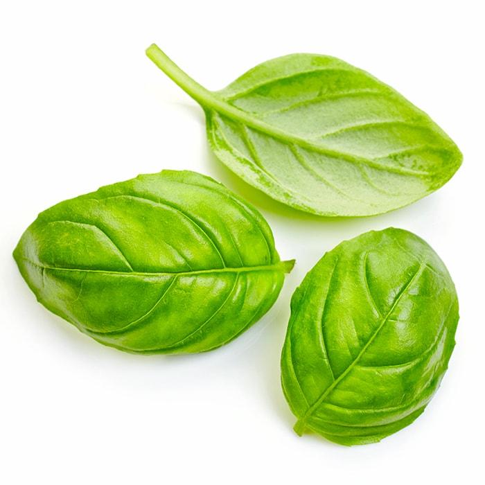 feuilles de basilic